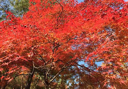 kyoto_image2_181212
